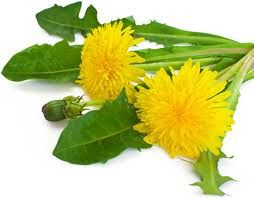 Cheap Non-Toxic dandelion killer