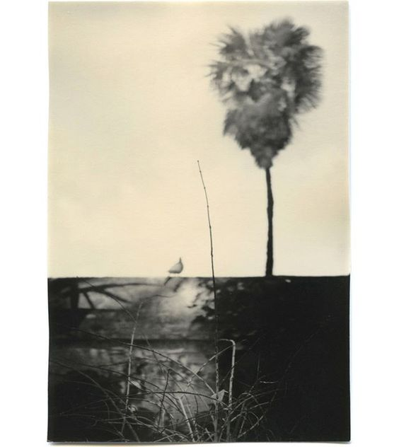 The Mouth of Krishna. #161. Gelatin Silver print.  Dedicated to #palmtree lovers! like @bruno_v_roels. 😉 # themouthofkrishna #Seville #gelatinsilverprint #analogphotography #blackandwhite