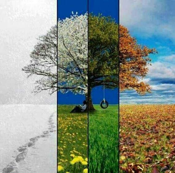 The chronological look of seasons passing. Great to do with a familiar tree like one outside the home or at a favorite park.: