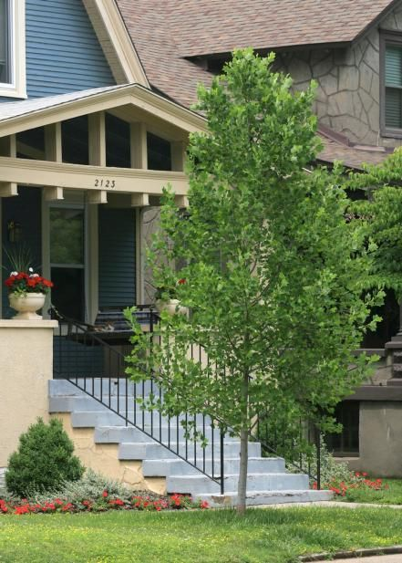 Discover front yard trees that provide curb appeal and beauty from the experts at HGTV Gardens.