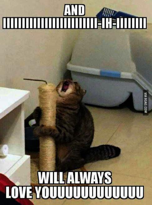 Cute Cats Love Hugging Cute Cats Good Morning Images Funny Cat Memes Funny Animal Memes Funny Dog Memes