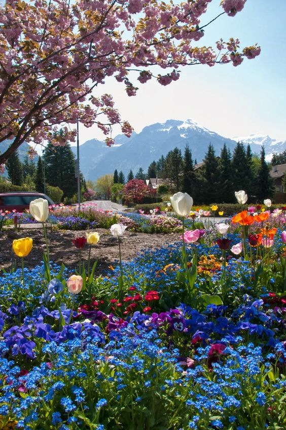 Flowers in Switzerland: