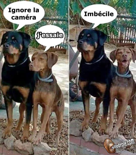 Imbécile... - Marie Andres - #Andres #Imbécile #Marie