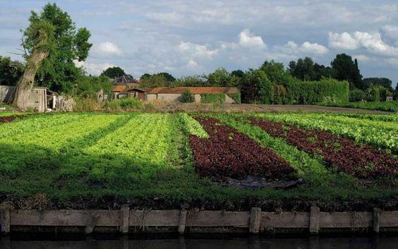 Pommes de terre| Mark Diacono on French potato varieties