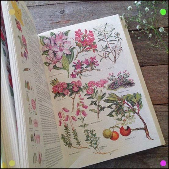 Huge Wildflower Book Botanical Book Watercolor Artist Etsy With