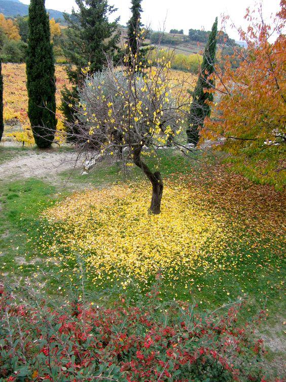 cerisier déplumé