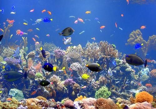 17 Facts You Probably Didn T Know About Coral Reefs Saltwater Fish Tanks Fish Tank Saltwater Aquarium Fish