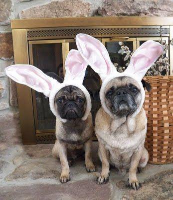 bug bunnies