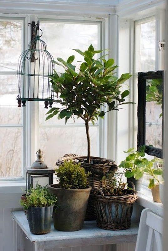 Plant grouping indoor plants pinterest different - Jardines de interior ...