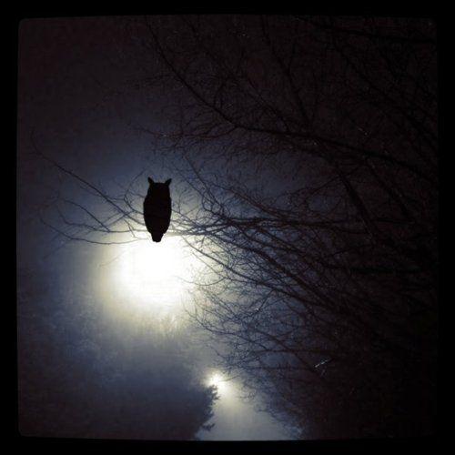 scary fucking owls