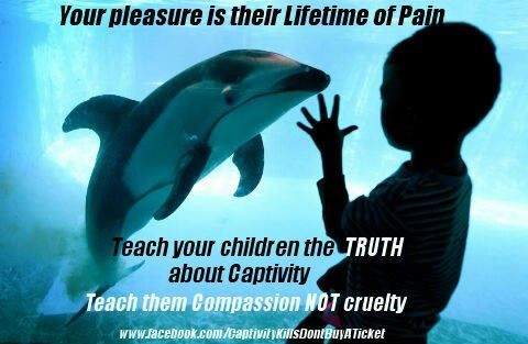 Your pleasure is their lifetime of pain. Teach your children the TRUTH about captivity.