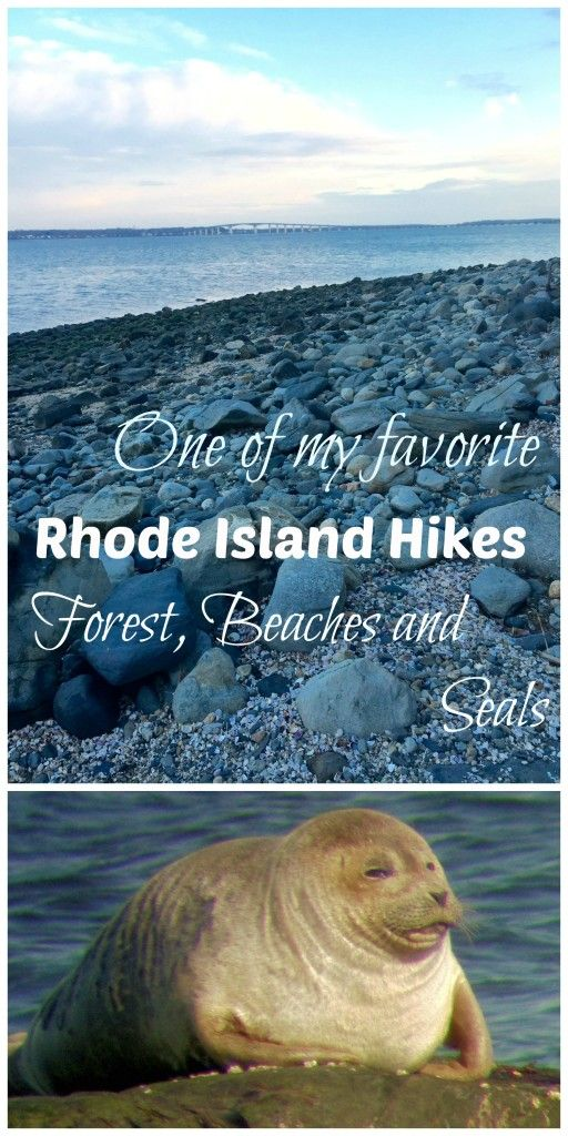 My Favorite NE Hike: Beach, Forest and Seals in North Kingstown, RI