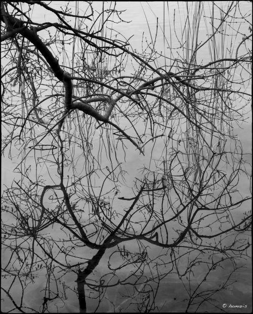 homaris:  11 de gener de 2014. Reflexes a l'estany de Banyoles.