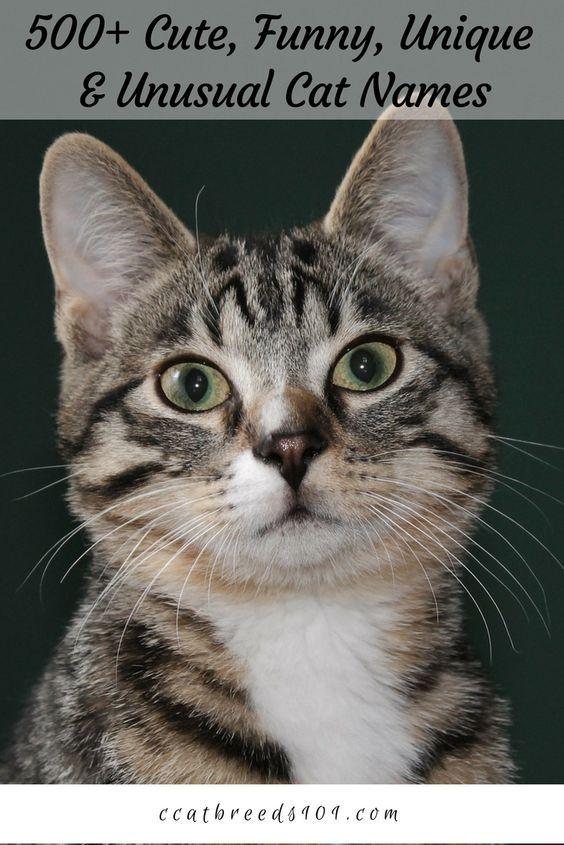 500 Cute Funny Unique Unusual Cat Names In 2020 Grey Cat Names Kitten Names Kitten Names Unique