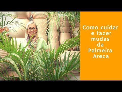 Como Cuidar E Fazer Mudas Da Palmeira Areca Bambu Palmeiras