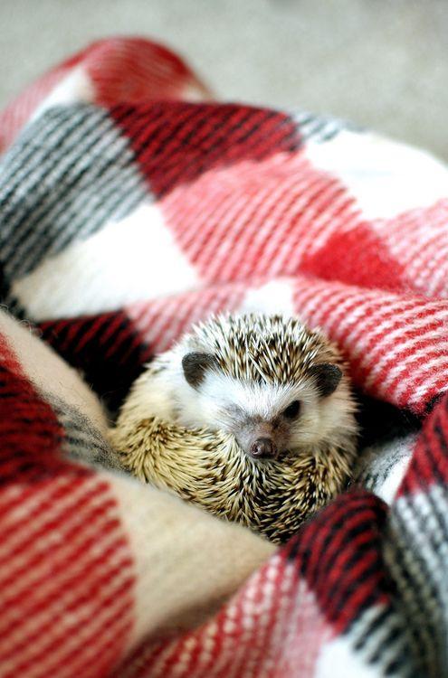 So adorable!!: