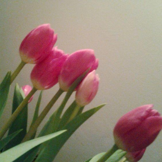 Ma alle emozioni non puoi mentire, le emozioni ti vengono a prendere, passano attraverso le mura della ragione, si insinuano nel profondo, lasciano il loro profumo ovunque, comunque.  A. De Pascalis  #flowers #lovingcolor #tulipani #amore  #nontiscordar