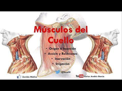 Anatomia de Cabeza y cuello - Musculos de la cara y Huesos completo ...