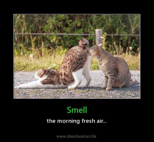 Smell - Dmotivators.hk, just epic fun!