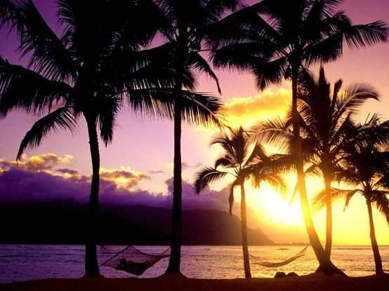 Hawaii!!! Hawaii!!! Hawaii!!!