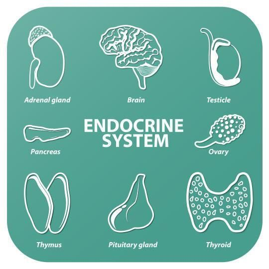 Re-balancing the endocrine system for optimal health (Photo: iStockphoto)  So often, patients drag themselves into my office complaining of multiple symptoms like thinning hair, brittle nails, erupting skin, poor sleep, exhaustion, constipation, sexual or menstrual dysfunction and weight gain.  These