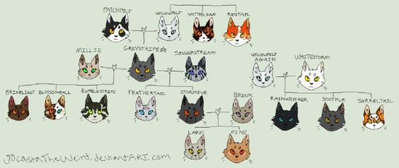 Warrior Cats Quizzes Quotev