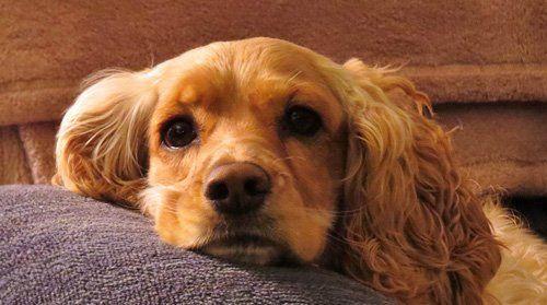 Floppy Eared Dog