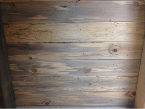 Blue Lodgepole Pine Wormwood Ceiling Beetle Killed Blue