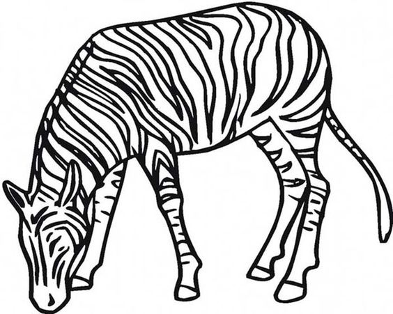 Coloring Pages Of Zebra Stripes Zebra Coloring Pages Zebra Shark Coloring Pages