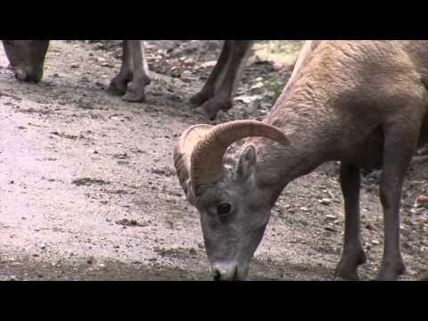 Video: Rocky Mountain National Park, Colorado   traveLink