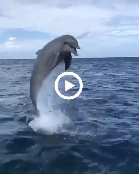 Este moço teve a honra de nadar ao lado de um lindo golfinho!