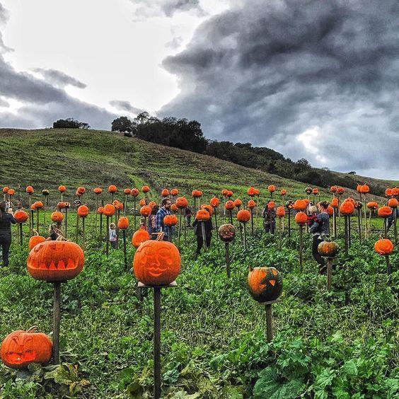 Such a fun night at @tarafirmafarms #pumpkinsonpikes party! #halloween #farm #tarafirmafarms #pumpkins #petaluma