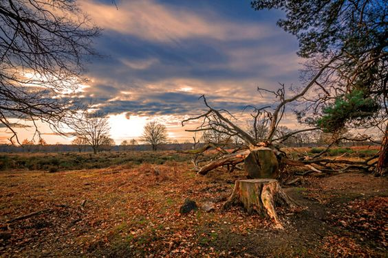 Heidelandschaft im Sonnenuntergang