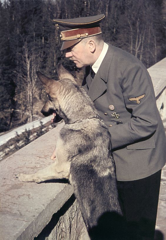 Hitler and Blondi, his Alsatian German Shepherd, at the Berghof (1942). The dog was a 1941 gift from Martin Bormann. Both died in the Berlin Chancellery bunker on April 30, 1945.: