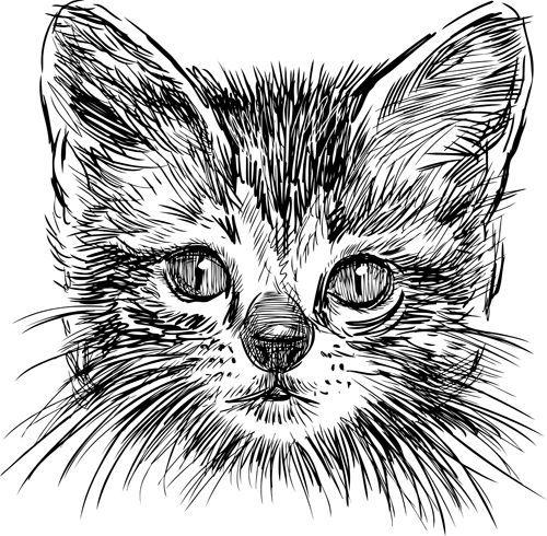 Pin Von Monika Kruger Auf Katzen Katzen Kunst Katze Zeichnen Malvorlagen Tiere