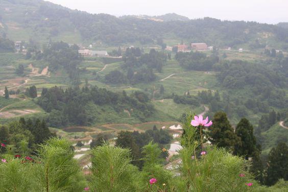 Yamakoshi village in Niigata prefecture
