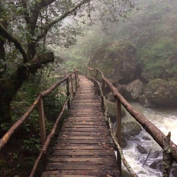 """120 Me gusta, 4 comentarios - Biólogos de nacimiento (@biologosdenacimiento) en Instagram: """"Cascadas Paraíso, Puebla México ????????"""""""