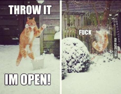 Cat snow fail: In Open, Funny Shit, Funny Cat, Funny Picture, Poor Kitty, Funny Stuff, Snowball Fight, Funny Animal