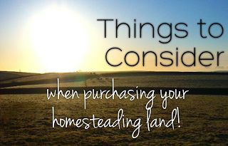 The Petite Plantation: Things to consider when purchasing your homesteading land