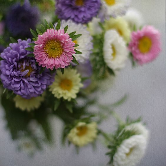 delicate bouquet - A beautiful and delicate bouquet of field flowers with daisies, always alive!