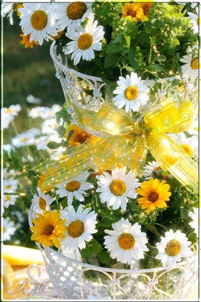 20 im genes animadas de flores hermosas margaritas - Fotos de flores bonitas ...