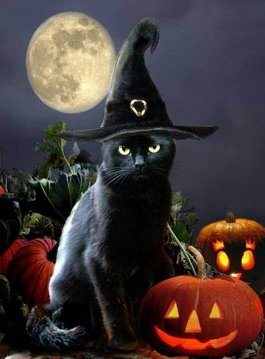 Black cat in witch's hat with Halloween pumpkins.: