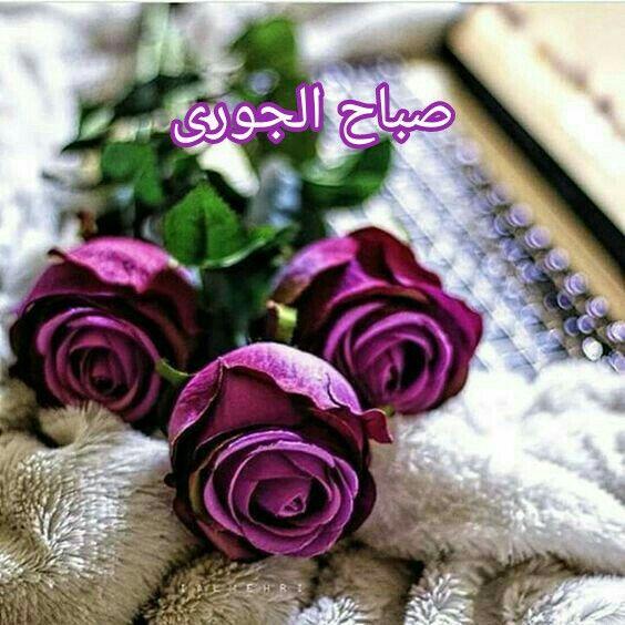 Pin By نهر الجمال On صباحات ومساءات Beautiful Rose Flowers Love Rose Flower Beautiful Flowers Wallpapers