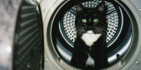 Un chat blanc ressort blanc et noir après une lessive - http://boulevard69.com/un-chat-blanc-ressort-blanc-et-noir-apres-une-lessive/?Boulevard69