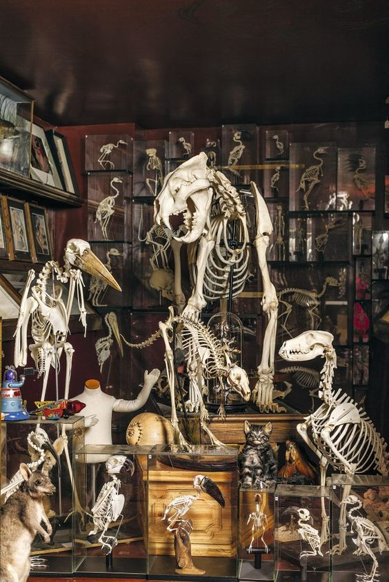 After a tremendously successful Kickstarter campaign, Viktor Wynd raised £16,090 of his £10,000 target and The Viktor Wynd Museum of Curiosities, Fine Art and Natural History is now officially open...
