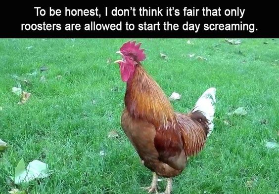 Afternoon Funny Meme Dump 33 Pics