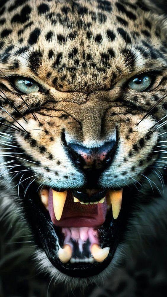 Warning Teefies Meow Moe Angry Animals Animals Animals Wild