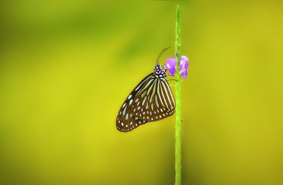 Ant and Butterfly by EDEMIN RAMIREZ viewfinder image production on 500px