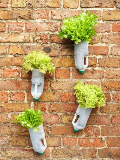 Cultivo reciclar 8
