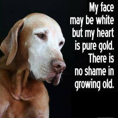 Dogs grow old just like us, they should be loved until the end